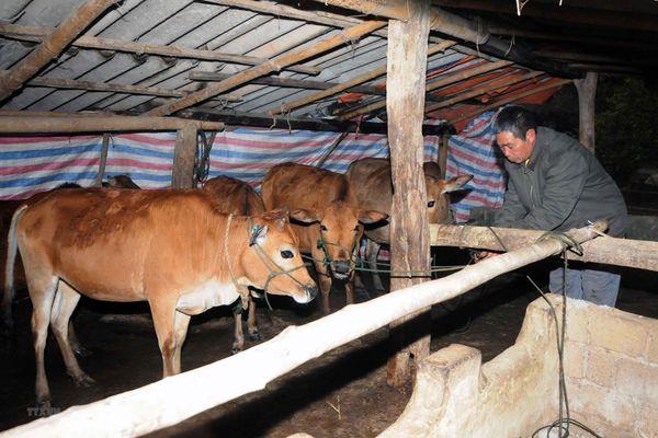 Khẩn trương phòng chống rét cho người, cây trồng, vật nuôi ở vùng cao