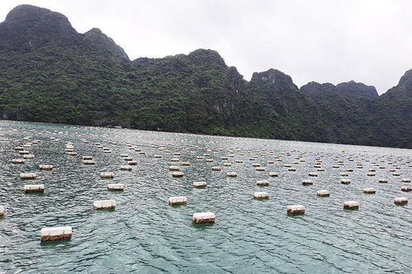 Doanh nghiệp đầu tiên đạt quy chuẩn kỹ thuật địa phương về vật liệu làm phao nổi trong NTTS lợ, mặn tại Quảng Ninh