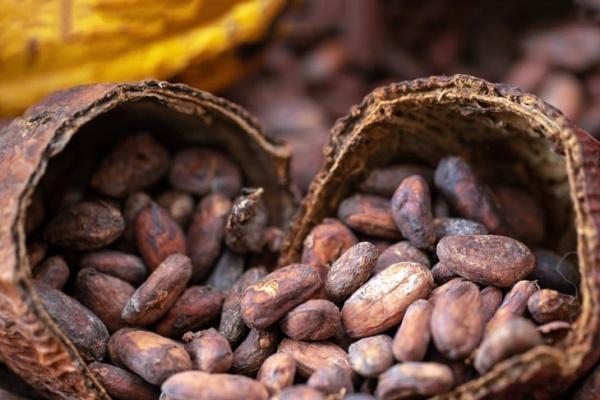 Giá cà phê, đường giảm trong khi cacao, bông tăng