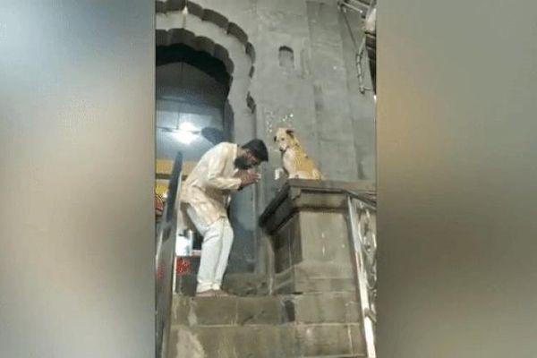 Chú chó bắt tay các tín đồ trước cửa đền gây 'bão' mạng xã hội
