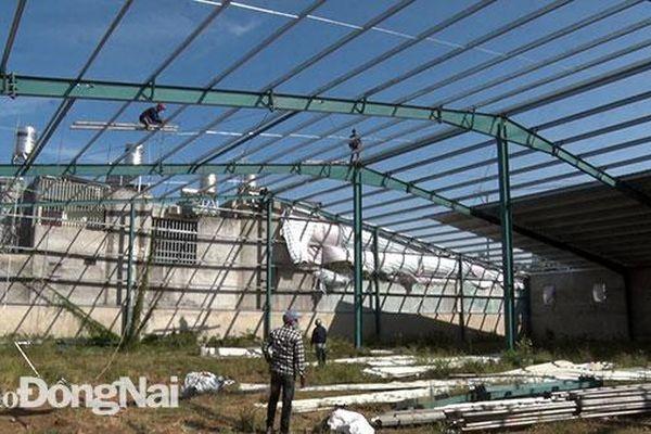 Phường Phước Tân cưỡng chế công trình xây dựng trên đất nông nghiệp