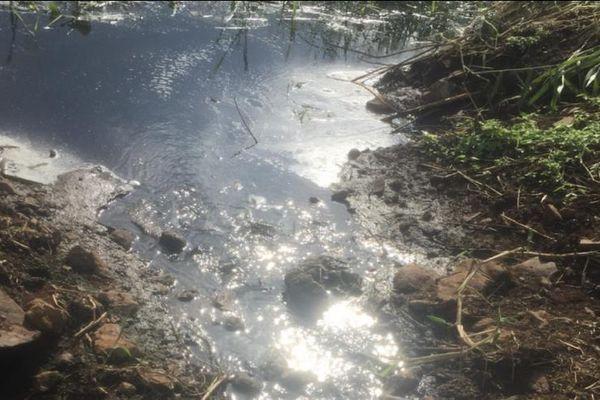 Gia Lai: Trang trại nuôi heo bốc mùi hôi thối ra môi trường
