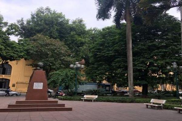 Cọ Hoàng gia - biểu tượng của đất nước Cuba vươn xanh trên đất Việt