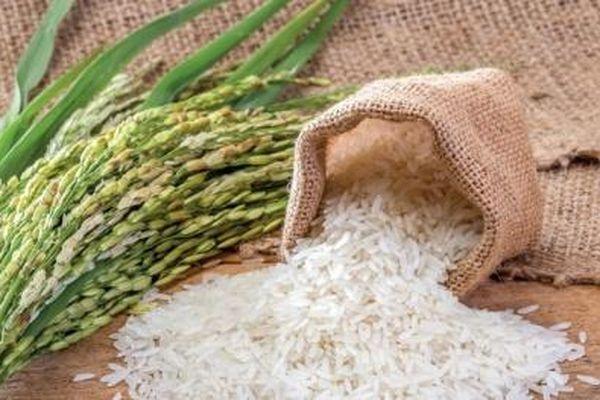 Xuất khẩu gạo Việt Nam: Một năm nhiều thành công
