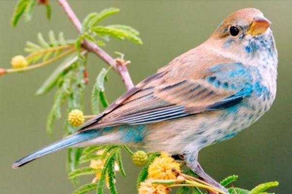 Mỹ: Giảm ô nhiễm ozone đã cứu hơn 1,5 tỷ con chim trong bốn thập kỷ