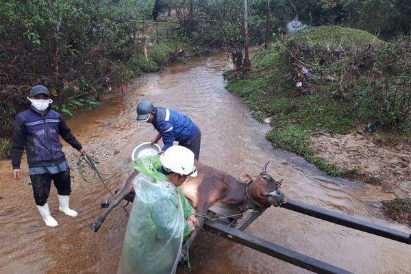 Hơn 900 gia súc chết rét tại Thừa Thiên Huế: Khẩn trương lập đoàn kiểm tra