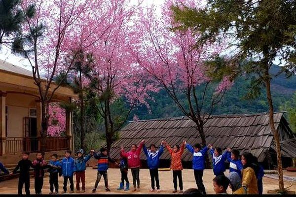 Ngất ngây với khung cảnh tuyệt đẹp khi hoa anh đào bung nở ở miền tây Nghệ An