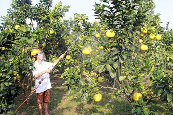 Hỗ trợ trồng cây ăn quả đạt tiêu chuẩn VietGAP