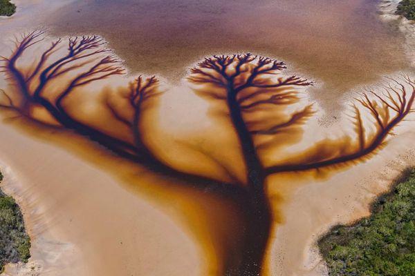 Hình ảnh cây giữa hồ gây chú ý mạng xã hội