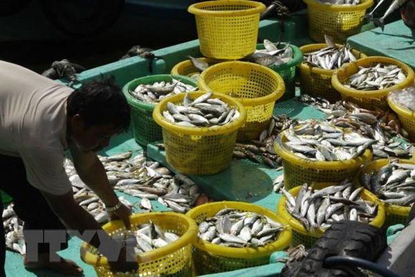 Kiên Giang: Tạo sức cạnh tranh, thúc đẩy tăng trưởng kinh tế biển