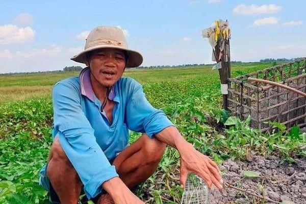 Đại dịch COVID-19 khiến nông dân Campuchia đổ xô đi bắt chuột bán sang Việt Nam