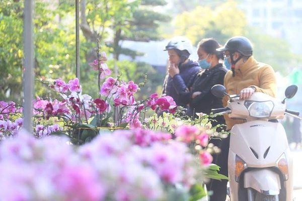 Địa lan siêu đẹp giá 130 nghìn đồng/giỏ chơi Tết hút khách ở Hà Nội