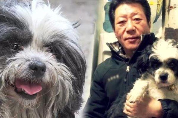 Chú chó tăng cân trông thấy nhờ hành trình đến 'ăn chực' 7 cửa hàng mỗi ngày, tưởng là hành động tinh ranh nhưng hóa ra là chuyện buồn của con vật