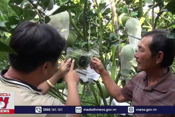 Nông dân Đồng Tháp chuẩn bị nông sản phục vụ Tết