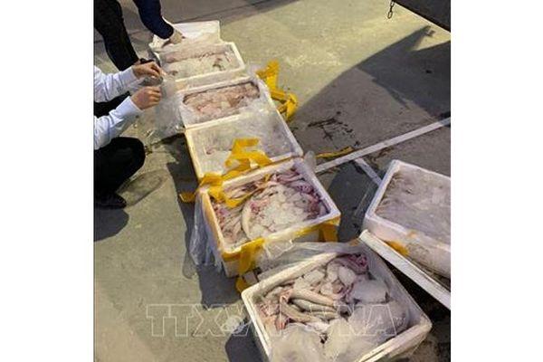 Phát hiện xe tải vận chuyển cá khoai ướp phoóc-môn
