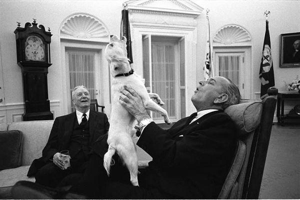 Ngắm 'Đệ nhất thú cưng' của các vị Tổng thống Mỹ