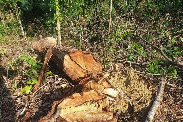 Cận cảnh khu rừng phòng hộ bị bán trái phép