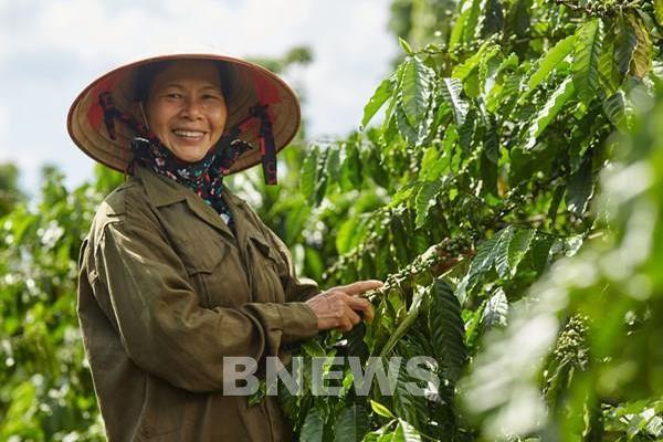 Lâm Đồng chứng nhận quyền sở hữu 3 loại cây trồng