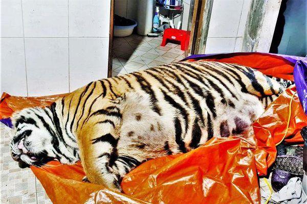 Vụ phát hiện xác hổ trong nhà: Gia chủ ra đầu thú cơ quan công an