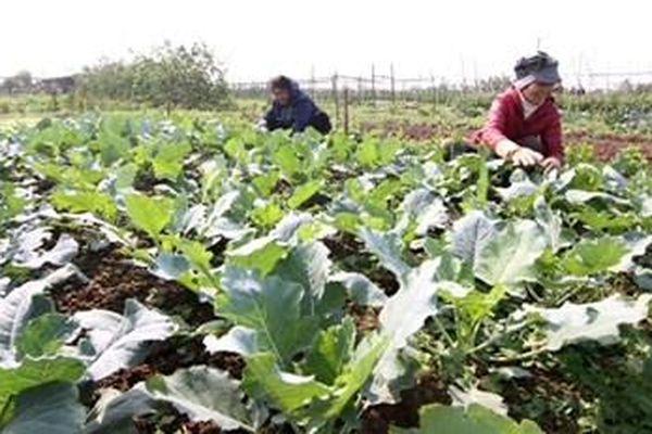 Liên kết sản xuất, kinh doanh nông sản, thực phẩm an toàn