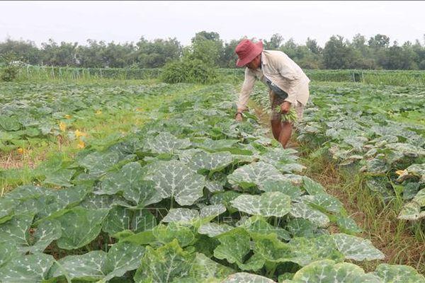 Giảm diện tích trồng lúa để tăng hiệu quả sản xuất