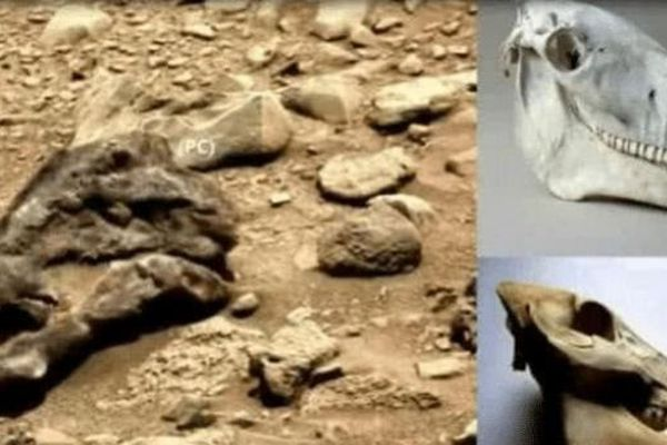 Bí ẩn về sự sống cổ đại trên sao Hỏa - phát hiện vật thể lạ giống hộp sọ khủng long