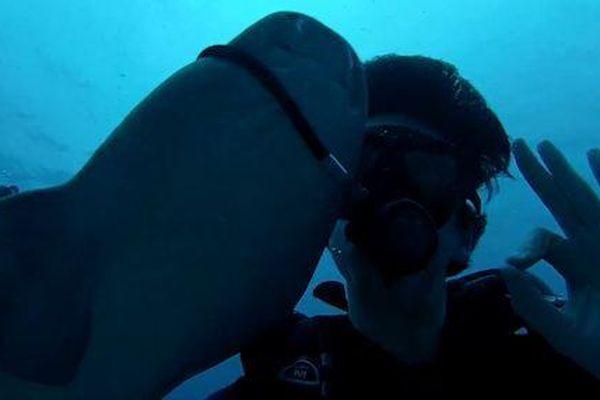 Thợ lặn bị cá mập kéo ống thở ra khỏi người