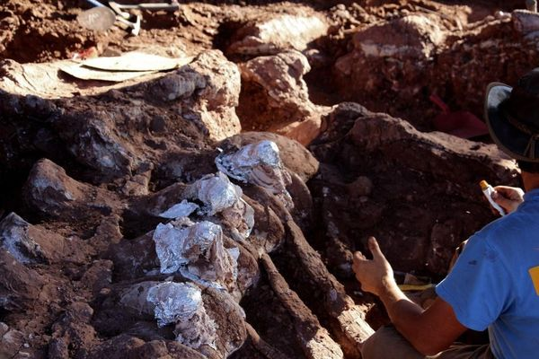 Phát hiện xương khủng long lớn nhất thế giới
