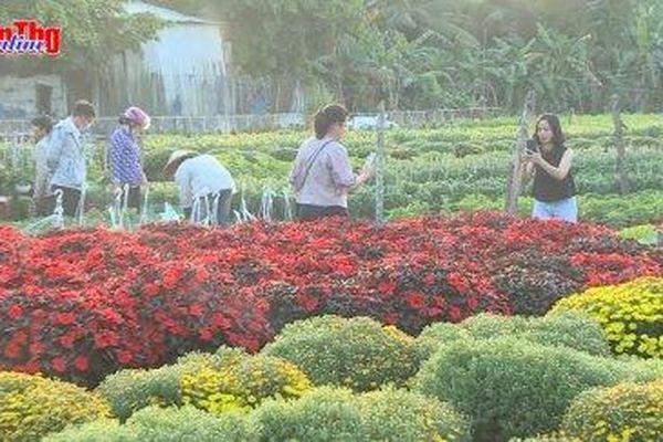 Về Cần Thơ, du xuân làng hoa ngày giáp Tết