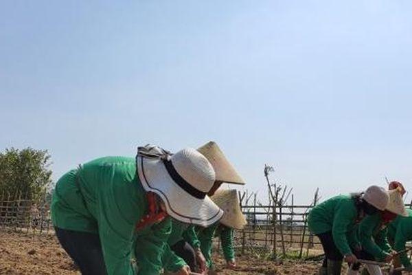 Truyền lửa nông nghiệp hữu cơ đến vùng đặc biệt khó khăn