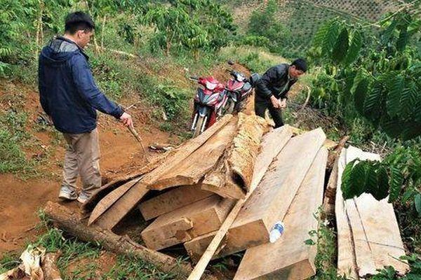 Lâm Đồng: Phát hiện gần 4m3 gỗ không rõ nguồn gốc
