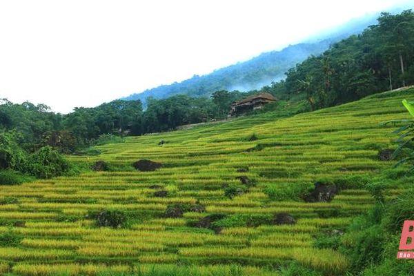Du lịch sinh thái - cộng đồng Pù Luông: Hướng đến phát triển bền vững