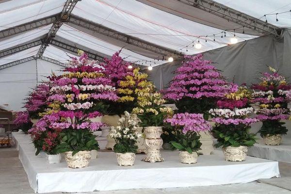 Hải Phòng: Chợ hoa Xuân Tân Sửu 2021 phục vụ nhân dân vui Tết, đón Xuân