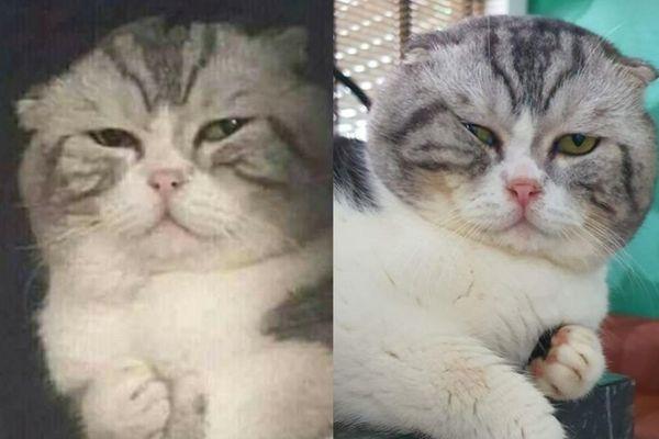 Chú mèo Việt Nam được chế meme 'đau ở đây này' giờ ra sao