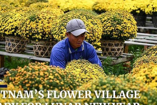 Hình ảnh làng hoa Việt Nam chuẩn bị Tết trên báo nước ngoài