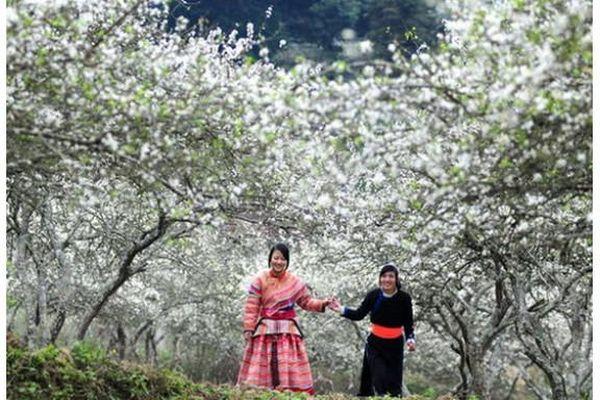 Hoa ban mùa đầu – Mùa của hy vọng, tin yêu!