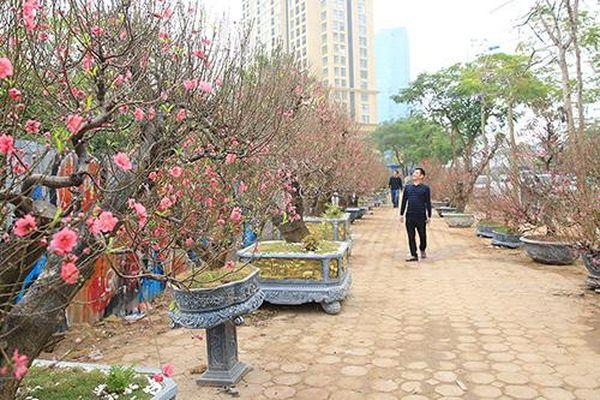 Chùm ảnh: Nhiều loại hoa, cây cảnh giá 'khủng' khoe sắc trên đường phố Hà Nội