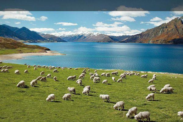 Bài dự thi 'New Zealand - Bật mí trăm điều thú vị': New Zealand và niềm mơ của bố