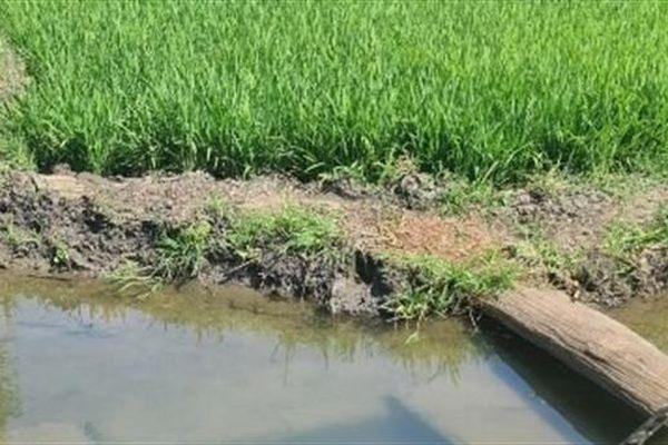 Thông tin mới kênh thủy lợi 14 tỷ sâu hơn mặt ruộng