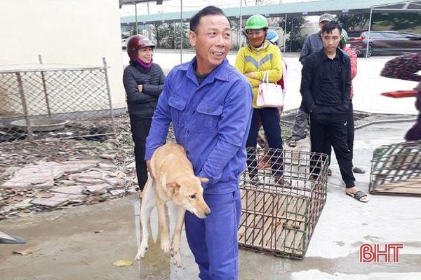 Thu gom hơn 100 con chó từ Hà Tĩnh ra Hà Nội tiêu thụ