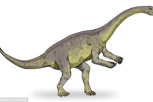 Phôi thai khủng long biết di chuyển như chim