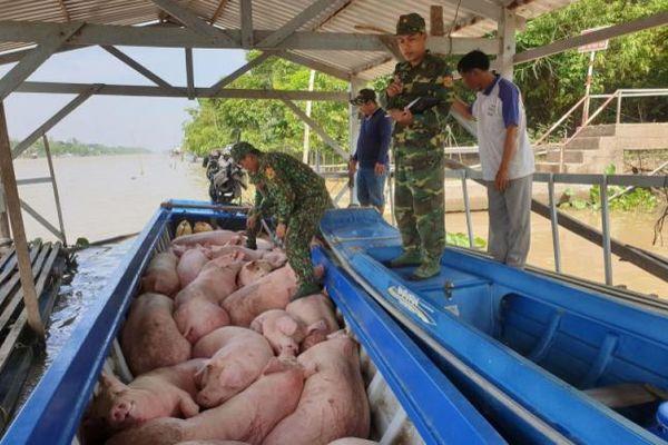 Tin kinh tế 7AM: Làm rõ việc xuất khẩu lậu lợn qua biên giới; Thời của YouTube-mạng ảo, tiền thật