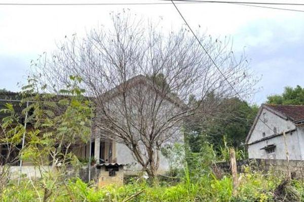 Hai cây Đào 'cổ thụ' theo chân người dân từ huyện miền núi về thành phố