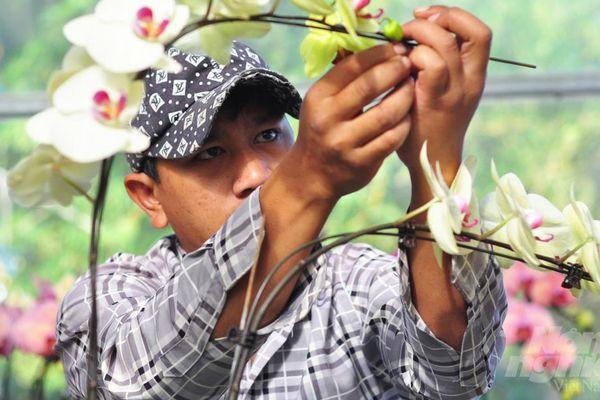 Nhà vườn Đà Lạt căng sức đóng 10.000 gốc lan hồ điệp phục vụ Tết