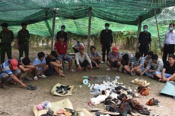 CLIP: Công an Bạc Liêu và Tiền Giang chia nhiều hướng đánh úp 2 sân gà