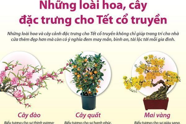 Những loài hoa, cây đặc trưng cho Tết cổ truyền