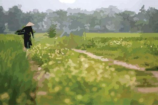 Mẹ tôi và cánh đồng làng