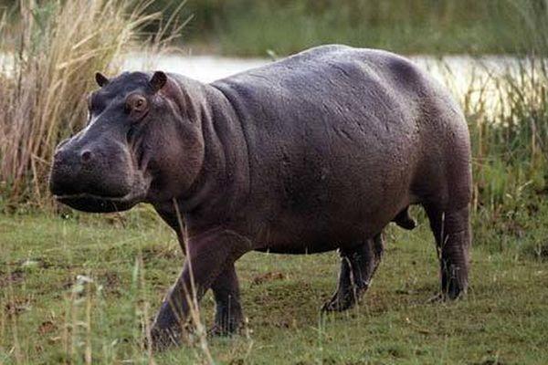 Thói hư tật xấu của các loài vật