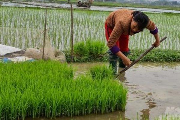 Nông dân Tuyên Quang nô nức xuống đồng sau Tết Tân Sửu