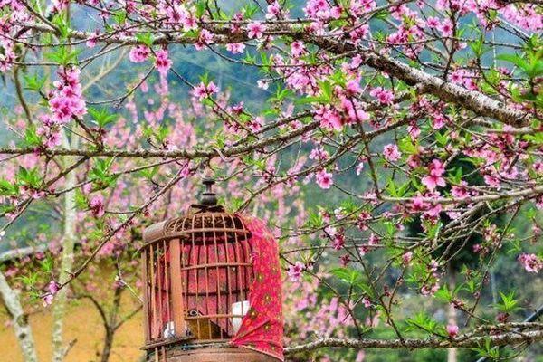 Trải nghiệm một mùa xuân thật đẹp, thật nồng nàn nơi cao nguyên đá Hà Giang